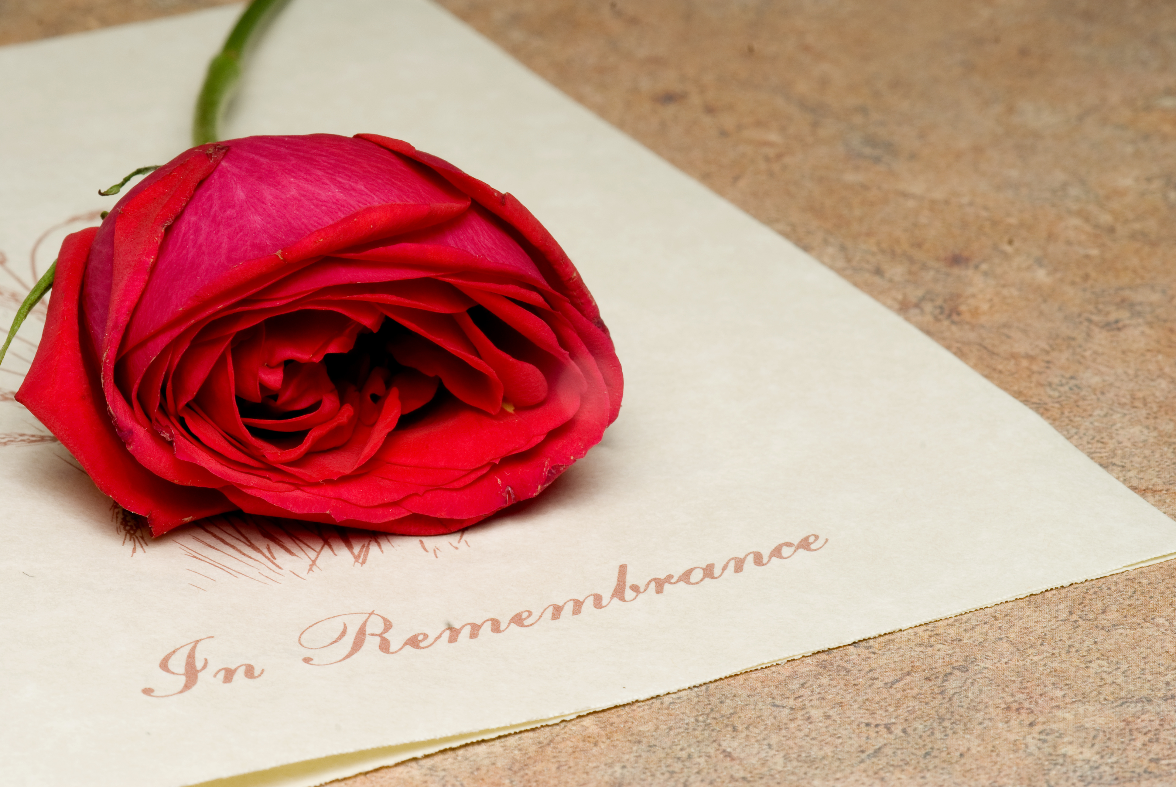 A funeral bulletin with a single red rose.